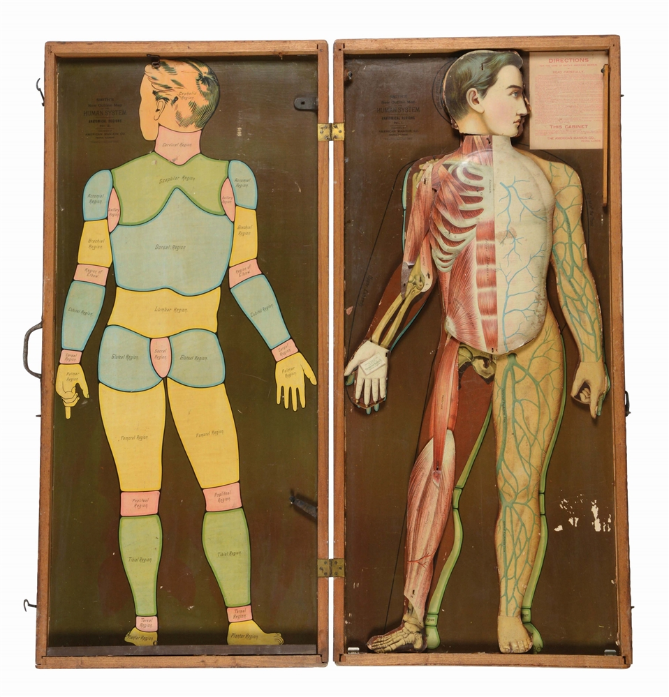 Medical Smiths Human System in Wooden Case.